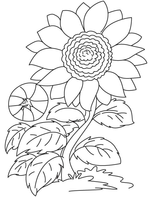 Mewarnai Gambar Bunga Untuk Paud