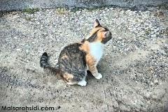 Kucing Pun Pandai Merajuk