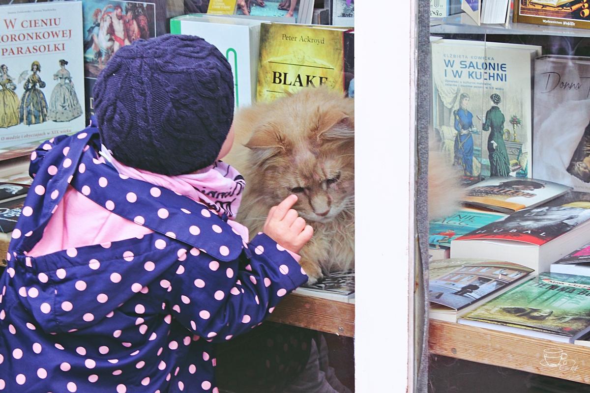 Dwa koty na wystawie księgarni, książki, koty, maine coony