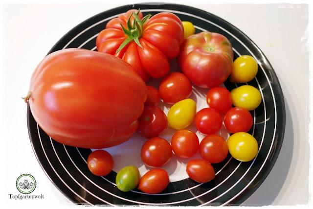 Gartenblog Topfgartenwelt The Grand Paradeis Show: verschiedene Tomatensorten