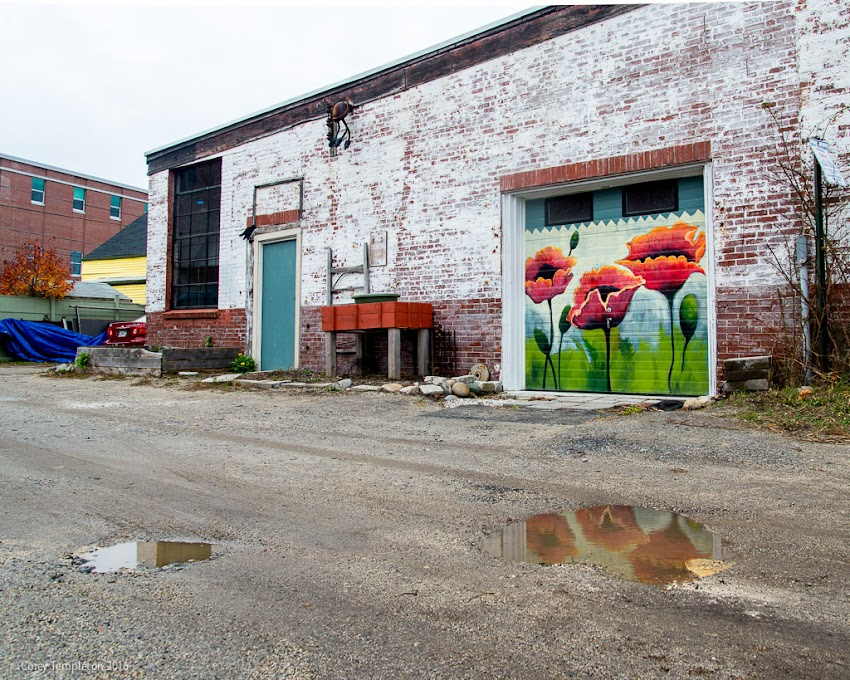 Portland, Maine USA November 2016 photo by Corey Templeton of flowers mural in Bayside between Parris and Brattle streets.