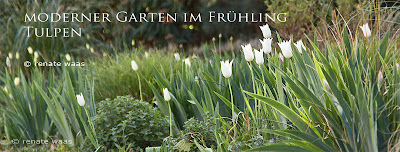 Blumenzwiebeln im modernen Garten, Blumenbeete, Staudenbeete