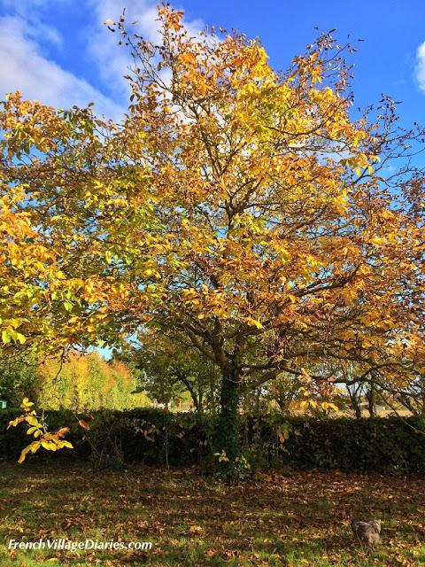 French Village Diaries Autumn colours Deux Sevres