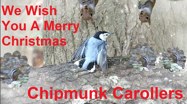 Chipmunk Choir - We Wish You A Merry Christmas!
