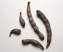Xylopiaaethiopica