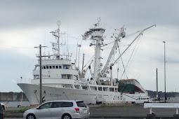 Bekerja di Kapal Ikan Jepang
