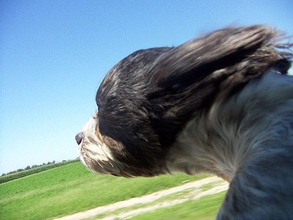 The dog aerodynamics 1