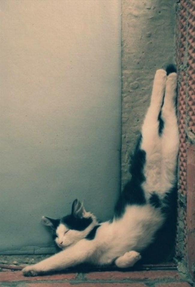 30 cats who have grasped the art of sleep fu