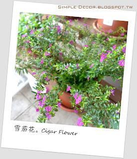 http://simple-decor.blogspot.tw/2016/03/greeny-garden-cigar-flower.html