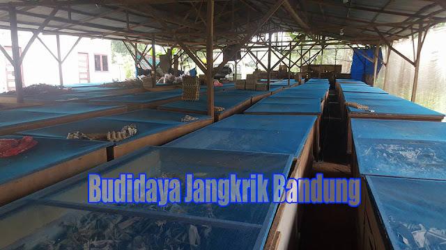 Budidaya Jangkrik di Bandung Yang menjanjikan keuntungan