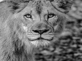 सपने में जानवरों देखना | sapne mein janavaron dekhna