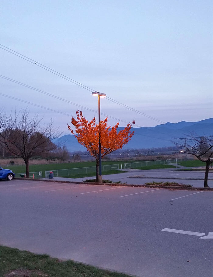 17 Pictures Of Trees That Prove The Miracle Of Life - This Tree Still Has Its Leaves Because Of The Light Shining On It