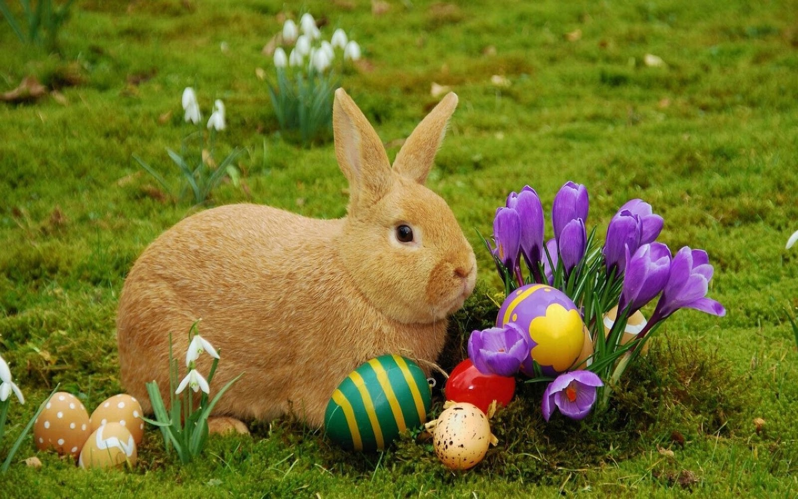 Easter Bunny Images: Free & High Definition Easter Bunny ...