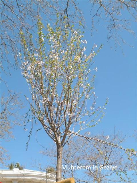 baharda çiçek açmış ağaç