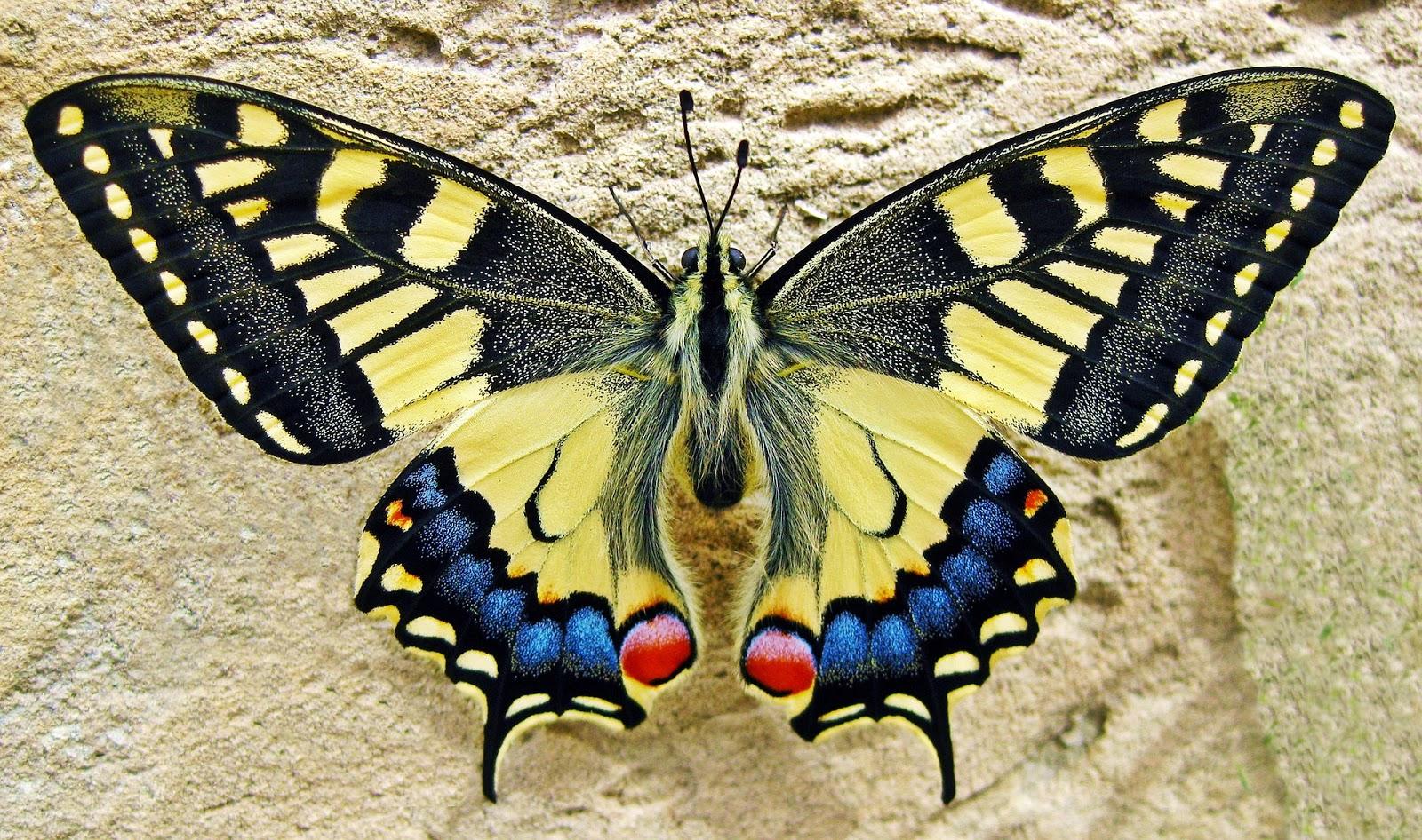 Szkolenia motyli