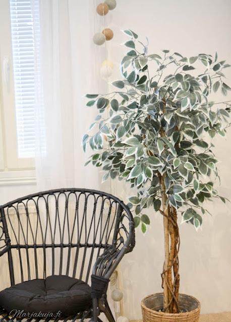 tekokasvi viherpuumi limoviikuna fiikus