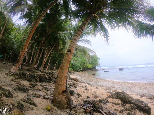 coconut trees and beach