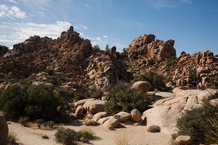 Travel: California diaries - Joshua Tree Park