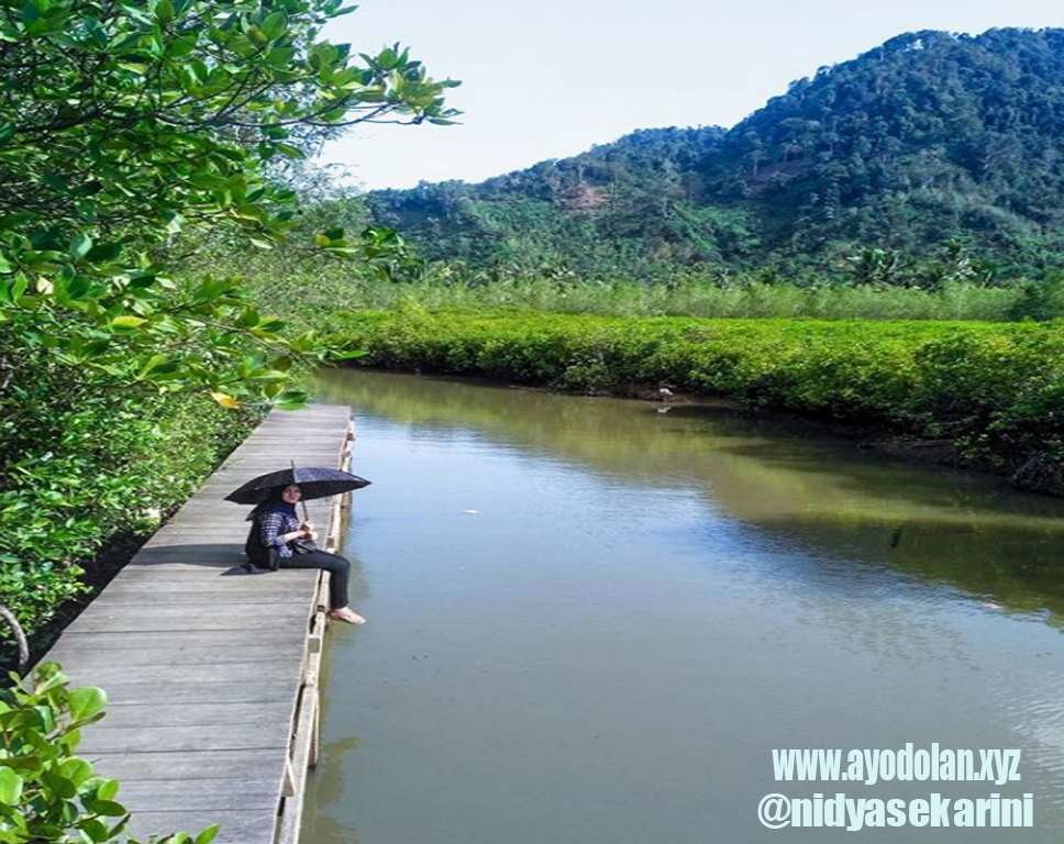 Rute lokasi dan harga tiket masuk hutan mangrove pancer cengkrong trenggalek