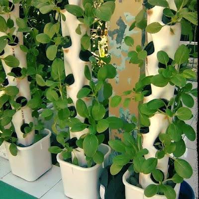 tower hidroponik pvc, urban farming, urban hidroponik