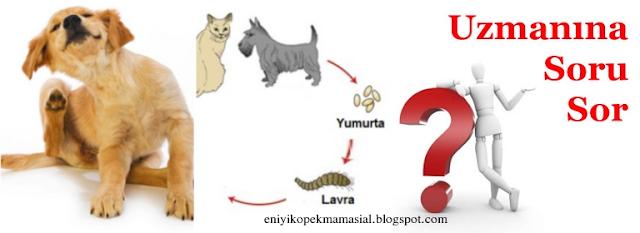 köpeklerde parazit belirtileri