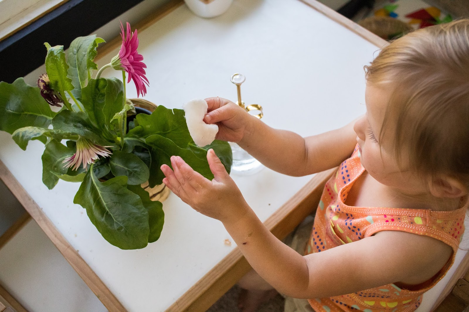 Plant care in a montessori home for House plant maintenance