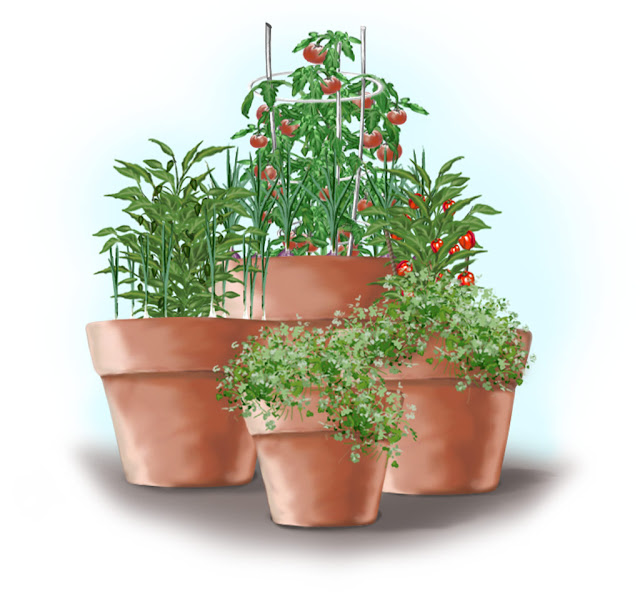 Bonnie Plants Salsa Garden In Containers
