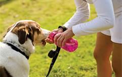 prevenir los cristales de estruvita en perros