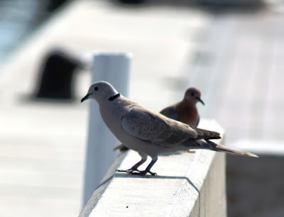 http://lead-green-life.blogspot.ae/