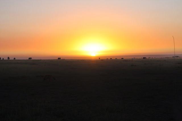 tansania safari afrikka matka serengeti savanni