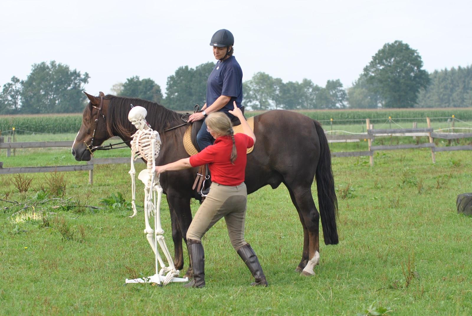 physio riding wie schwer darf der reiter f r sein pferd sein. Black Bedroom Furniture Sets. Home Design Ideas