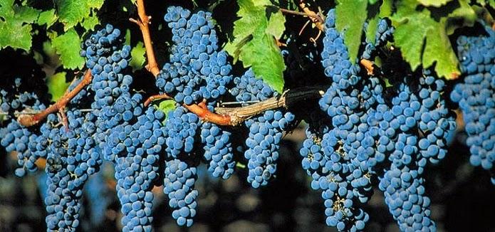 Elaboração do Vinho