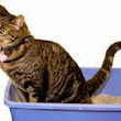 Urinary Issues In Cats