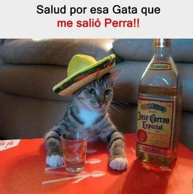 Salud por esa gata que me salió perra, tequila, José Cuervo