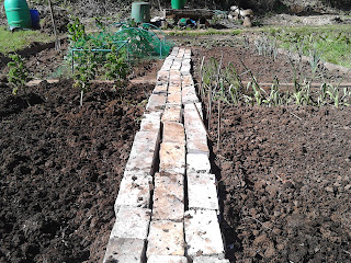 Allotment path made of bricks