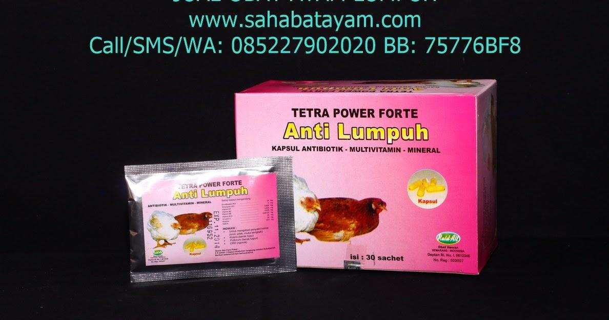 Obat Ayam Lumpuh Cara Mengobati Ayam Lumpuh Obat