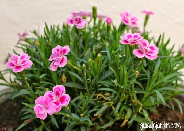 Clasificaci n de las plantas seg n su tama o guia de jardin for Tipos de plantas forestales