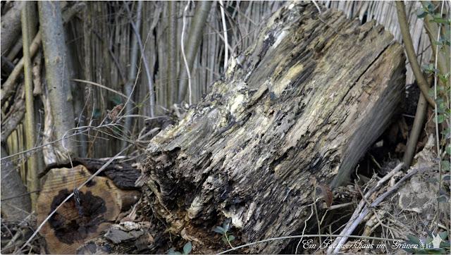 Totholz, Stamm, Säulenpappel