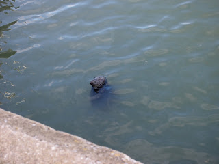 seal_howth_dublin