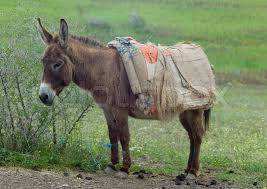 The Foolish Donkey Story- A Donkey And An Imaginary Rope