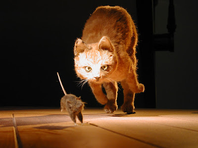 Reasons Why Some Cats Eat Mice
