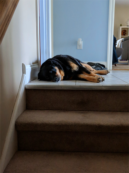 image of Zelda the Black and Tan Mutt lying at the top of the stairs