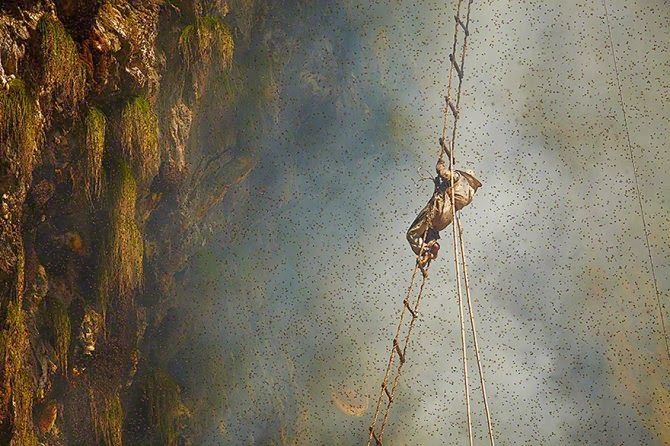 Gurung man on a ladder for honey hunting
