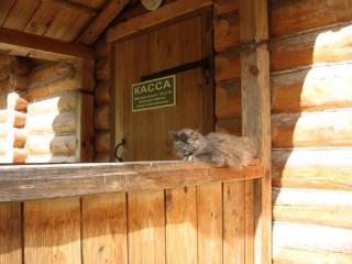 Учёный кот следит за поступлением наличных денег в кассу музея