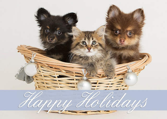 if you would like to purchase this card as well and help the animals of michigan humane click here - Humane Society Christmas Cards