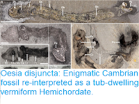 http://sciencythoughts.blogspot.co.uk/2016/08/oesia-disjuncta-enigmatic-cambrian.html