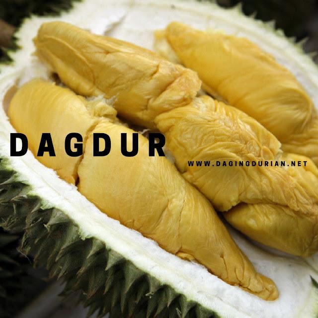 produsen-daging-durian-medan-ternikmat-di-tobadak