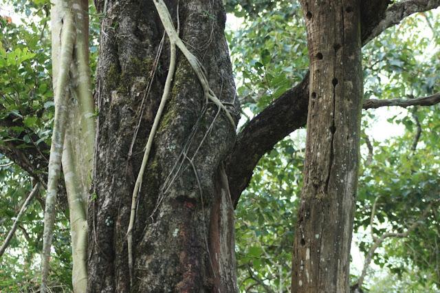 Bio-diversity treasure trove at BRT tiger reserve, Karnataka