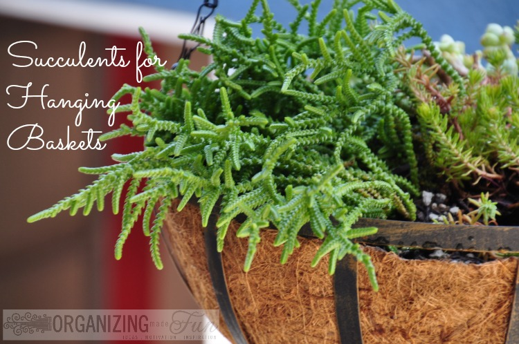 Hanging out with succulents organizing made fun hanging out with succulents - Succulent container gardens debra lee baldwin ...