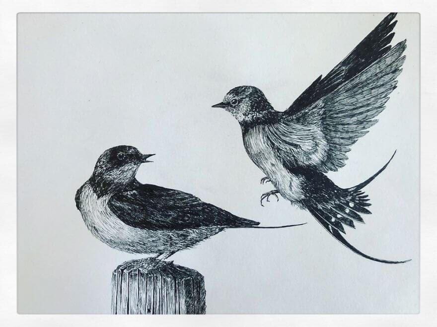 05-Barn-Swallows-Bas-Geeraets-Black-and-White-Drawings-of-Birds-www-designstack-co
